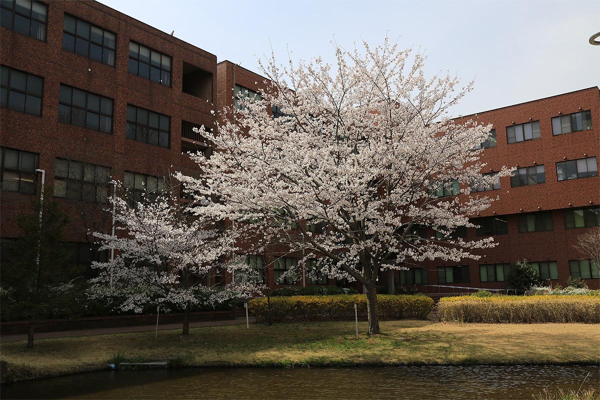 筑波大学の写真